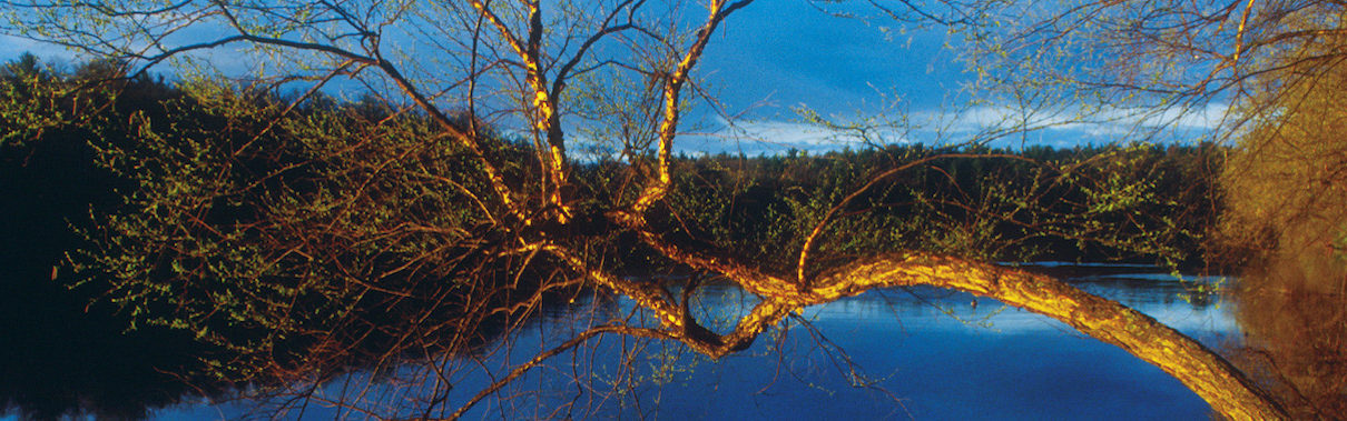 budding tree over a calm flowing river in Wood County, Wisconsin